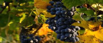 Христос вас избрал чтобы вы приносили плод